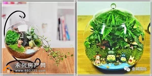3月12日亲子盆栽DIY 金城国际让春天更暖
